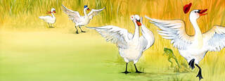 From a children's book about Swans