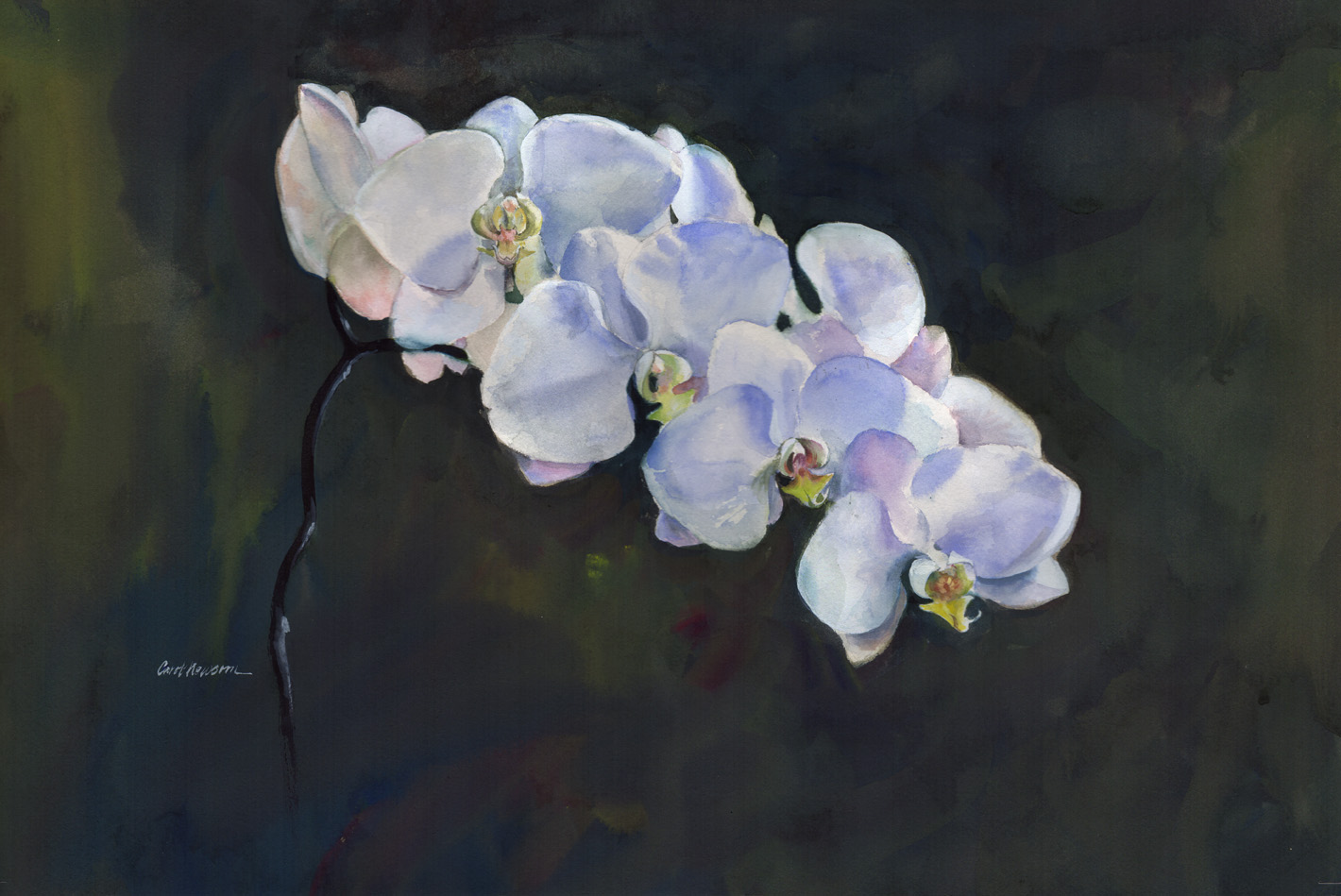 Orchids are luminous, lighted from the window behind them.  Watercolor 13 x 18
